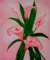 Flowers - Callas
